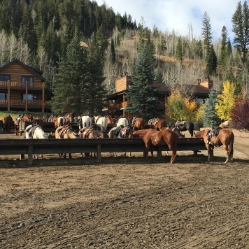 Horses ready - C Lazy U Ranch, Granby, CO